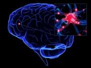 Neurotrasmettitori cervello