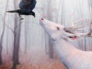 insegnamenti-degli-animali